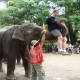 Mae Ta Man elephant camp with elephant riding,bamboo rafting,The Tiger Kingdom
