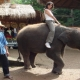 Chiang Mai budget tour 1: Elephant safari 1 day