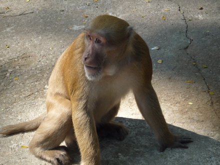 Chiang Rai Monkey temple