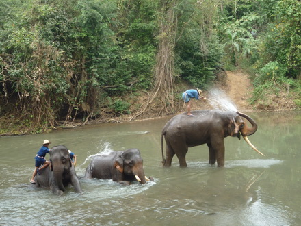 CHIANG DAO ELEPHANT CAMP with elephant riding,bamboo rafting, Lisu tribe and The Tiger Kingdom