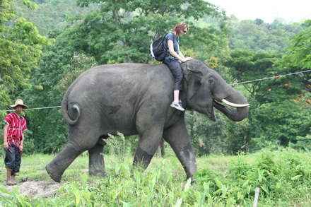PATARA ELEPHANT FARM To be an elephant trainer for a day!!!! (full day)