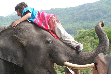 To be an elephant owner for 2 days!!!!Mae Tang area Chiang Mai Thailand.