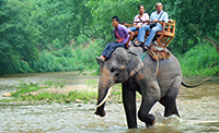 Chiang mai Thai Elephant Tours